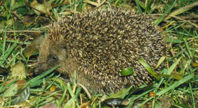 To be featured in upcoming film 'Hedgehog's List'